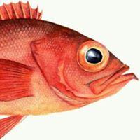 Redfish Events's logo